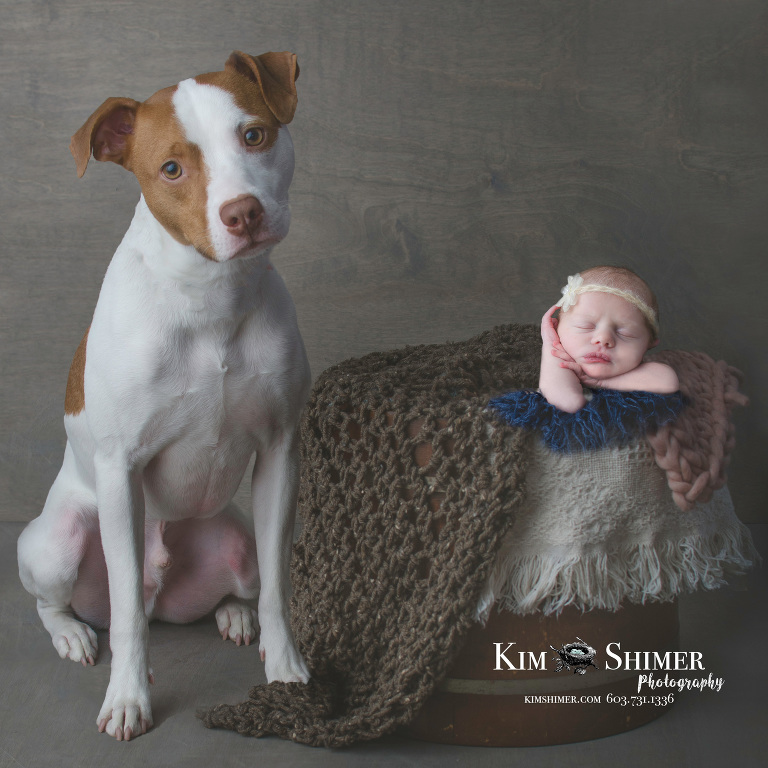 newborn baby photos dog baby photos newborn photographer NH baby photos NH